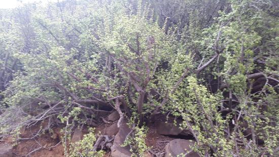 Eastern Cape, Νότια Αφρική: 20160507_133216_large.jpg