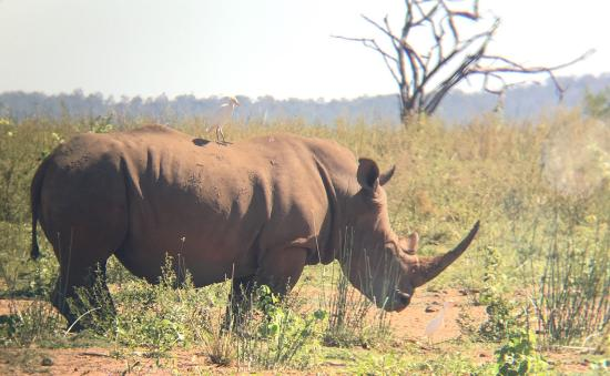 Pongola, Afrika Selatan: photo8.jpg