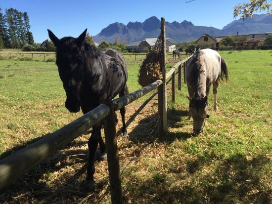 Sir Lowry's Pass, แอฟริกาใต้: photo6.jpg