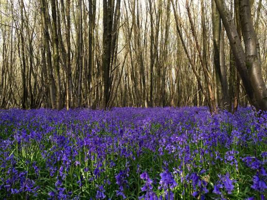King's Wood: photo0.jpg