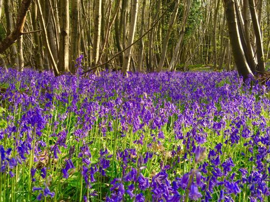 King's Wood: photo1.jpg