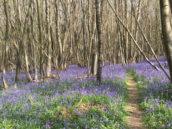 King's Wood: photo2.jpg