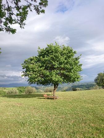 Lubriano, إيطاليا: DSC_1167_large.jpg