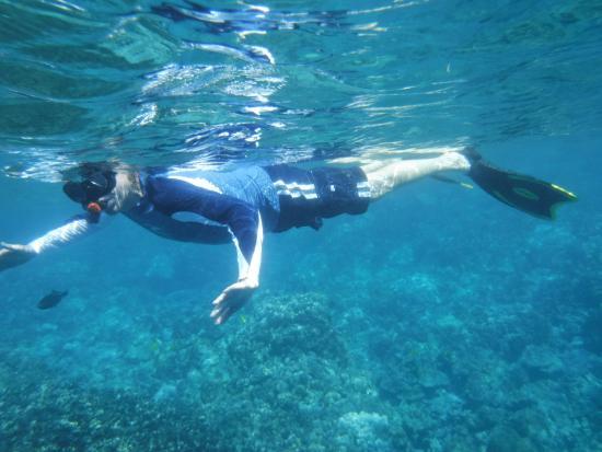 Kealakekua, HI: Very blue water. Enjoyed 5 - 20 foot depth to reef.