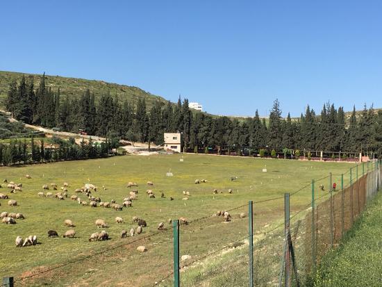Bisharat Golf Course