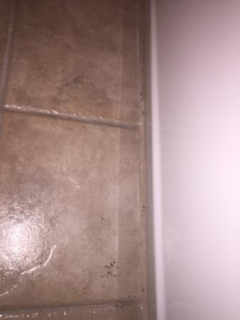 لو ريتز هوتل آند سويتس: Ants in our bathroom upon arrival, eek!