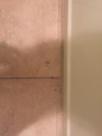Le Ritz Hotel & Suites: Ants in our bathroom upon arrival, eek!