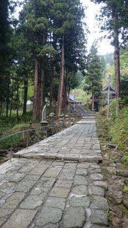 Daishoji Temple: 杉林の中を登っていく