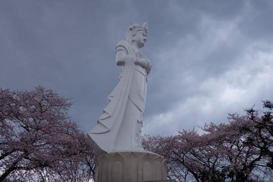 Shibata-machi, Japón: ดอกไม้งาม 05