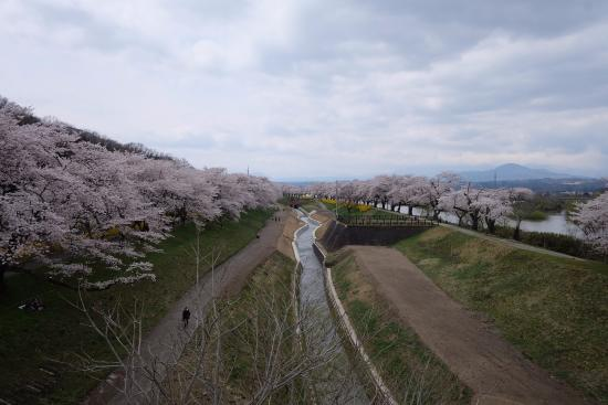 Shibata-machi, Japón: ซากุระสวยๆ 01