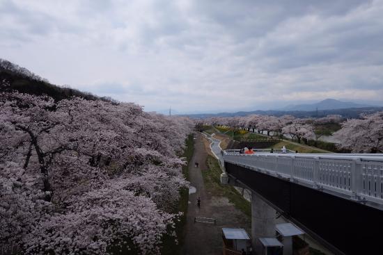 Shibata-machi, Japón: ซากุระสวยๆ 02