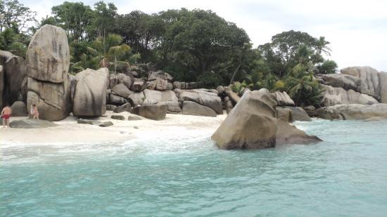 Praslin-øya, Seychellene: Coco Island well known for snorkeling with sea turtle.