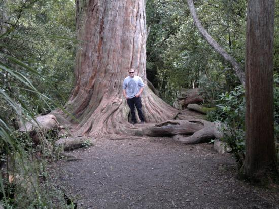 Peel Forest Park Scenic Reserve Geraldine 2019 All You Need To Know Before You Go With