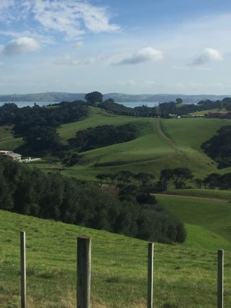 Waiheke Island, New Zealand: photo2.jpg