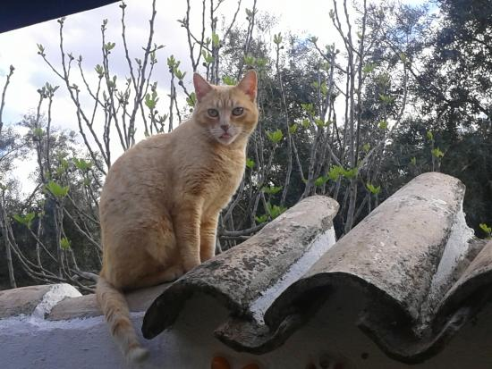 Cortijo del Sueno: Sjors is de vriendelijke huiskat