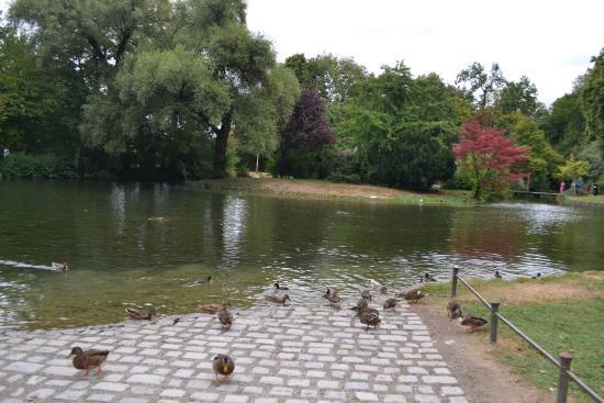 Laghetto con anatre foto di giardino inglese monaco di - Giardino con laghetto ...