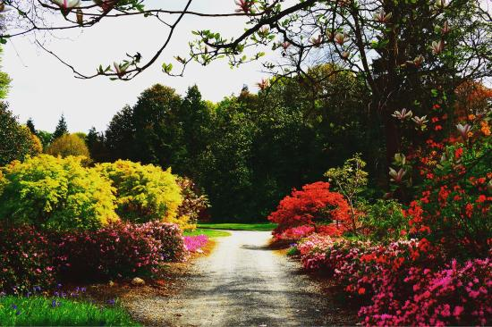 Mount Congreve House And Gardens Amazing Place To Relax Walk Along Beautiful Flowers N