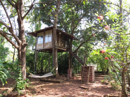 The Tree House Picture Of Atithi Parinay Homestay