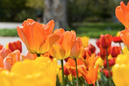Hales Corners, WI: Boerner Botanical Gardens