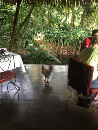 Hacienda La Isla Lodge: photo0.jpg