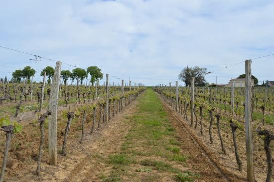 Grezillac, France : Vue des vignes