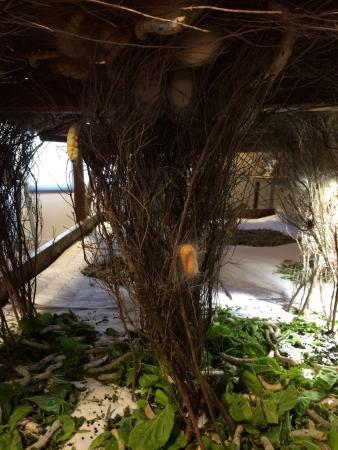 Musée de la Soie : photo1.jpg