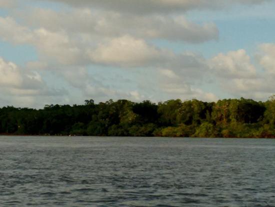 Salinópolis, PA: Garças no manguezal em frente
