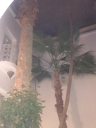 Riad Vert Marrakech: photo5.jpg