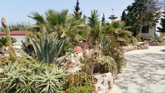 Almond Holiday Village: The cactus garden