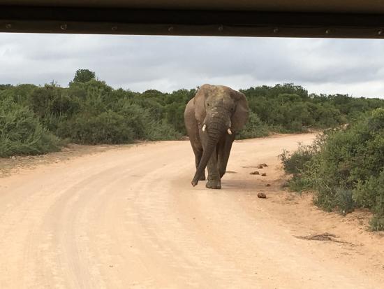 Addo, Zuid-Afrika: photo4.jpg