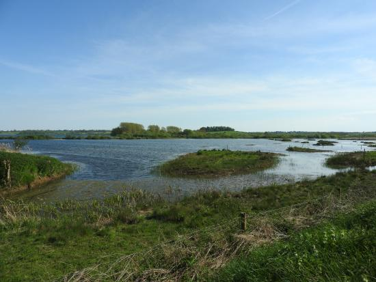 ‪Rutland Water Nature Reserve (Anglian Water Bird Watching Centre)‬