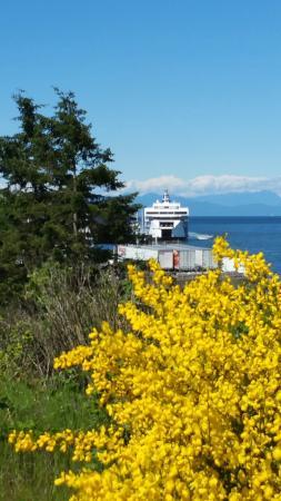 Нанаймо, Канада: BC Ferries