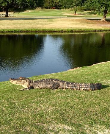 Sunset Beach, Carolina del Norte: Thistle Golf Club & Estates