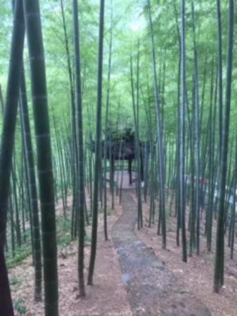Jiuhua Mountain: こんな竹林もあります