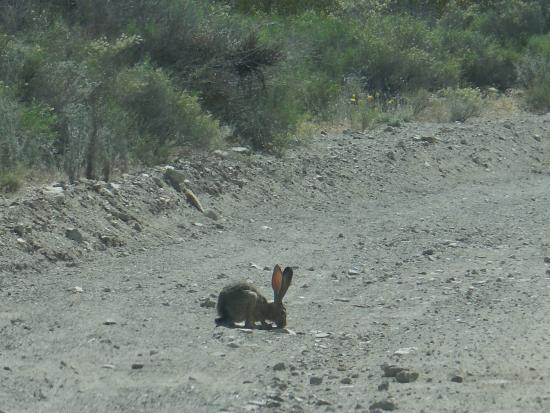 Rabbit On Road Picture Of Christmas Tree Pass Laughlin Tripadvisor