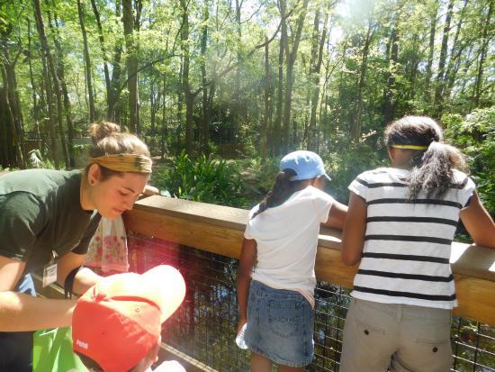 feeding the turtles and fish in the pond next to the aligator area rh tripadvisor com