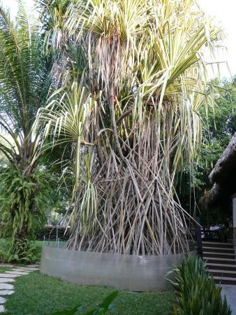 Hotel Ciudad Real Palenque: территория