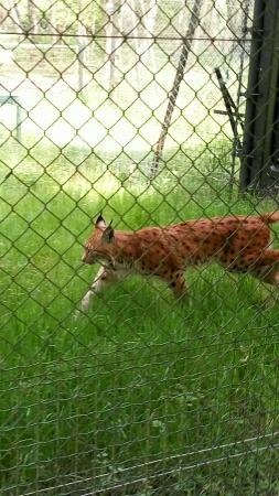 Snapchat 8217389295713530308 photo de reserve for Zoo haute touche