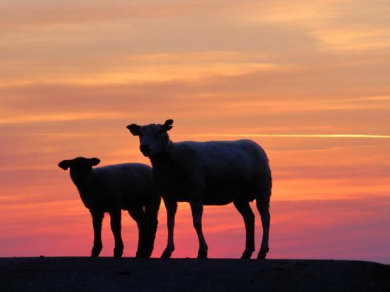 B&B Mandø: Stå op før solopgang og tag ud til diget ved Låningsvejen. Du har det hele for dig selv.
