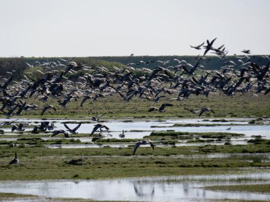 B&B Mandø: Det store fugletræk