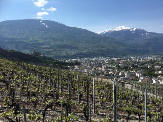 Hotel Pas de Cheville: Vineyard walk in the neighbourhoods