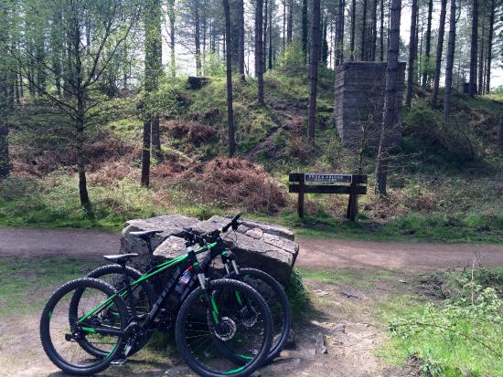 Cannop Cycle Centre: Great quality bikes to hire and love scenic routes!
