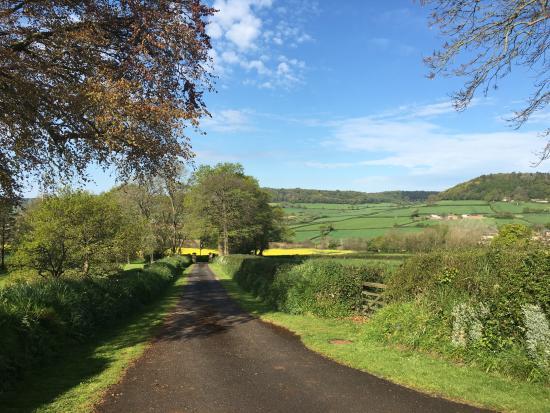 Sidbury, UK: surrounding view - lane to access the B&B