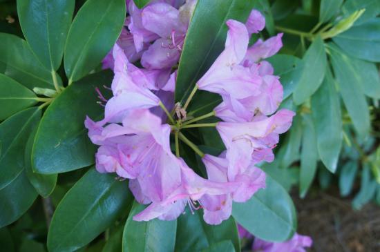 Huntsville, AL: Beautiful flowers