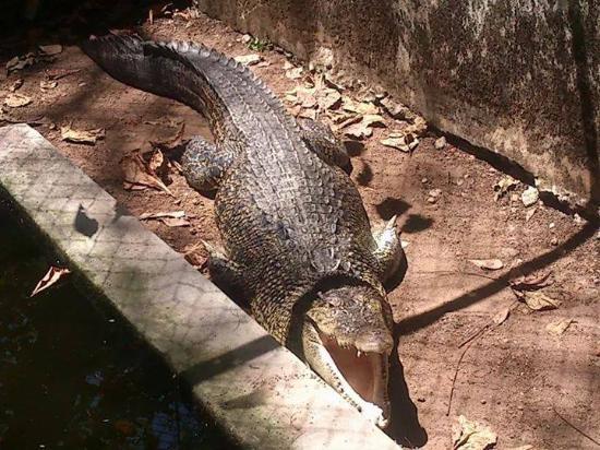 At Neyyar Wild Life Sanctuary