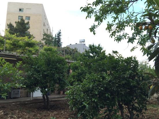 Beit Jala: Backyard