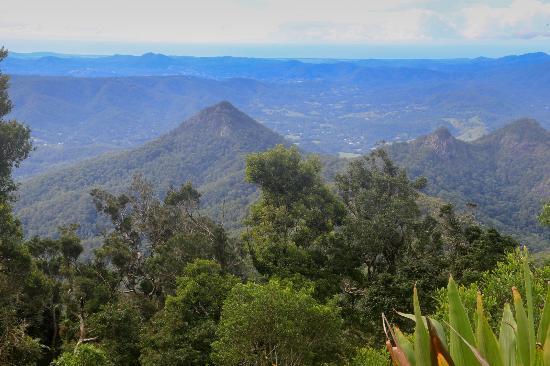 Mount Warning 사진