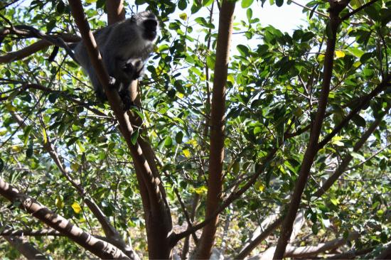Wilderness, Sudafrica: photo2.jpg