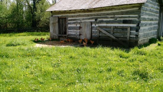 Eagle, WI: Chickens free range near historic era building.