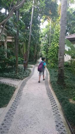 Baan Chaweng Beach Resort & Spa: DSC_0468_large.jpg